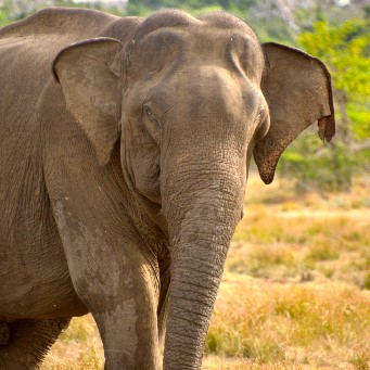 Naturresa- Sri Lanka